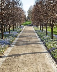 Blues in Bloom....Martha Stewart's home/farm her infamous river of blues driveway. Famed Dutch landscape architect...Jacqueline van der Kloet #DrivewayLandscape