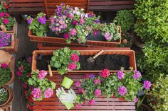 What are the best plants for patio containers and windowboxes this Easter?
