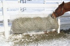 I& a big fan of slow feed nets for my horses. Not only do they slow down my hungry hippos, keep them busy and their bellies full until . Hay Feeder For Horses, Horse Feeder, Horse Stalls, Horse Barns, Horse Hay, Hockey, Horse Care Tips, Slow Feeder, Horse Treats