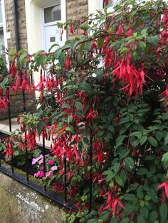 Spring flowers, move over. Theseastounding shrubs can get any gardener through the summer doldrums. Flowering Shrubs For Shade, Shade Shrubs, Flowering Trees, Evergreen Shrubs, Deciduous Trees, Trees And Shrubs, Tall Shrubs, Tall Grasses, Garden Shrubs