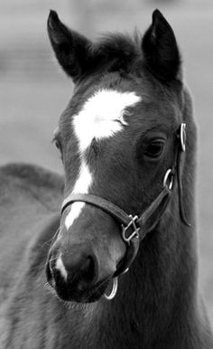 A cute colt.