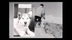 Admiral Byrd and the Dogs of His Expeditions