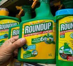 Pesticides:+l'Europe+envisage+de+renouveler+l'autorisation+du+glyphosate