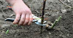 A venit primăvara! Herbs, Gardening, Flowers, Urban, Plant, Lawn And Garden, Herb, Royal Icing Flowers, Flower