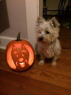Westie pumpkin