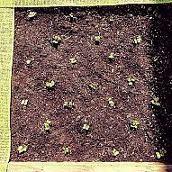 How to plant your entire 4X4 raised garden bed - by the square foot me… :: Hometalk