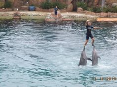 Sea World, Gold Coast, Queensland - Australia