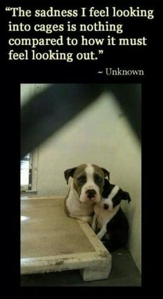 We need to get all animals out of shelters before anyone buys from breeders! A D O P T!