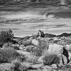 Bountiful Sonoran Desert in Black and White - photograph by Lee Craig  Outstanding black and white desert landscape via @leeseesart #blackandwhite #fineartphotography #artcollection