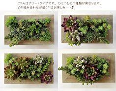フェイクグリーン 多肉植物 フレームスタイル Lサイズ 人工 :tanifakeframe-L:FlowerKitchen JIYUGAOKA - 通販 - Yahoo!ショッピング