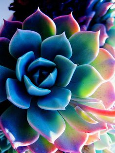 succulents...soothing colors