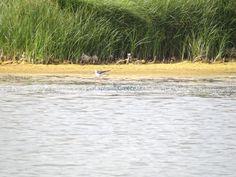 Λιμνοθάλασσα Στρογγύλη