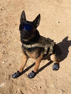 Such a brave soul for doing his duty as a soldier. I also happen to love his little shoes so his paws don't get burned on the hot sand!