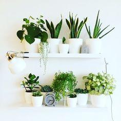Binnenkijken bij unieque - Plantshelfie