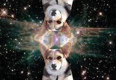 Corgis in Space