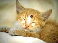 Resultados de la Búsqueda de imágenes de Google de http://www.celticbug.com/Real/KittyBug.jpg