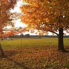 Magical Autumn- Camden NSW -My home town
