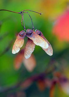 Seeds, butterflies or pinwheels?!