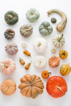 21 stylish pumpkin decorations gallery 21 of 21 - Homelife