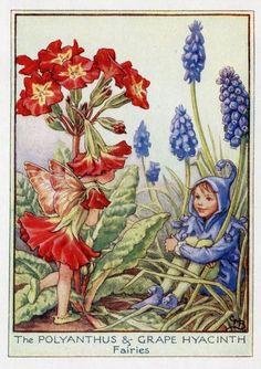 Polyanthus & druif hyacint Flower Fairy Vintage Print, c.1950 Cicely Mary Barker-boekillustratie plaat