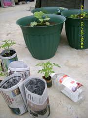 How to make seed starting pots from newspaper. All you need is paper, a bottle or soda can, and soil. Oh, and seeds too!