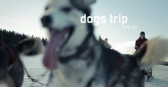 Dogs trip