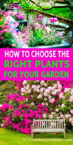 Love these tips for choosing landscape plants that will make my garden low maintenance. Now I can plan what to put in my backyard. #LandscapePlants #LowMaintenanceGarden #LandscapeDesign #GardeningTipsAndPlants