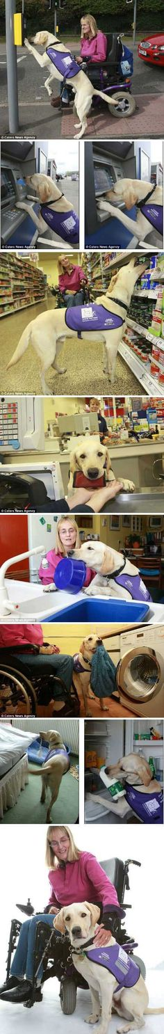 The ultimate dog - a service dog. >>> See it. Believe it. Do it. Watch thousands of SCI videos at SPINALpedia.com