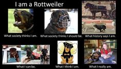 Rottweiler.......so true. I miss my friend, he was always leaning on me for love. Just a great dog.
