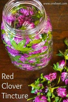 Remedies Home Red Clover Tincture Healing Herbs, Medicinal Plants, Natural Healing, Holistic Remedies, Natural Health Remedies, Herbal Remedies, Herbal Tinctures, Herbalism, Natural Medicine