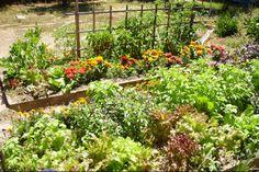 Companion planting for tasty harvests