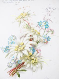 Vintage Austrian Postcard, lithograph, 1899, Edelweiss, Forget-me-Not, Alpine Flowers, Cancelled by AlpineCountryLooks on Etsy