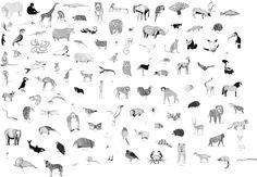 Ella Animals