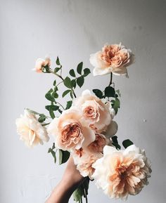 pale peachy peony-like roses (garden roses) or reflex roses Flora Flowers, Faux Flowers, Fresh Flowers, Wild Flowers, Beautiful Flowers, Floral Wedding, Wedding Flowers, Rose Arrangements, Floral Arrangement