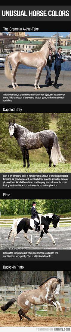 Unusual Horse Colors. I want the Cremello