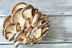 Make More Money By Growing Oyster Mushrooms Growing Mushrooms, Make More Money, Oysters, Stuffed Mushrooms, Vegan, Fresh, Vegetables, Food, Gardening