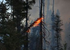Friday marks the fourth day of an intense firestorm in Canada's boreal forest that has engulfed large parts of Fort McMurray, Alberta—a frontier town.
