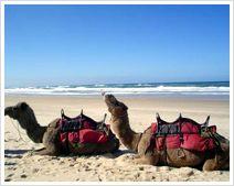 Destination -  exotic UAE
