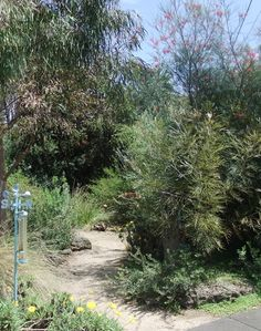 Carney garden Lovely Australian plant garden designed by Bev Hanson. Spectacular grevilleas, interesting banksias, many daisies and native grasses. Paths wind among large beds packed with bird-attracting plants tolerant of drought and clay soils.