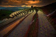Это некартины Ван Гога, арисовые поля вКитае