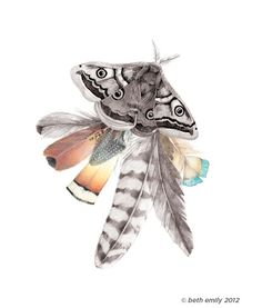 Moth Feathers A3 print by Beth-Emily $85.00