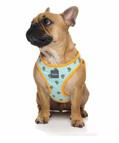 Your dog will be the 'sharpest' looking pooch on the block in the Tucson Step In Harness.   Our new FuzzYard Step In dog harnesses are the best solution for dogs who don't like things being put over their head....or have a big head!! They are lightweight super comfortable and, best of all, easy to fit!  Simply unclip the buckle, undo the velcro and let your dog 'step in' and you're good to go! Lifestyle Shop, Luxury Lifestyle, Dog Grooming Salons, Dog Steps, Luxury Spa, Dog Harness, Tucson, French Bulldog, Your Dog