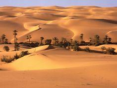 plantas del desierto ecuatoriano - Buscar con Google