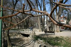 5 Must See in Bucharest - Main Attraction, Bucharest, Maine, Plants, Plant, Planets