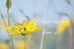 """Ever taken a daisyand pulled off the petals one at a time while saying, """"He loves me. He loves me not…""""? In 1 Corinthians 13, Paul starts out with two lists. What love isn'…"""