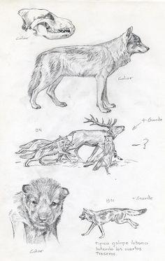 Bocetos Lobo