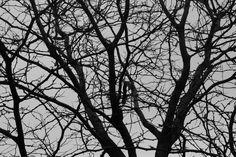 Chicago Tree