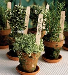 Small pots of plants and herbs as guest placeholders and favors. Photo from Weddings on the French Riviera
