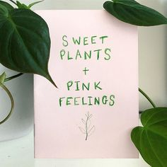 So excited to announce the launch of my first zine titled Sweet Plants and Pink Feelings. Its a 20 page zine containing all my favourite plants and illustrated by me . Its now for sale in my online shop! Illustrators On Instagram, Zine, Product Launch, Feelings, My Favorite Things, Sweet, Artist, Shop, Plants