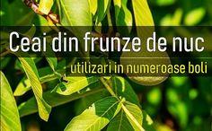 Sciatica, Natural Remedies, Plant Leaves, Herbs, Tea, Health, Plants, Alternative Medicine, Varicose Veins